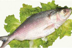 Fresh Hilsa Fish - 1 Kg (Subject to Availability)
