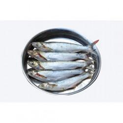 Fresh Bacha Fish - 500 Grm