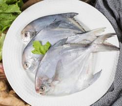 Pomfret Fish - 1000 Grm
