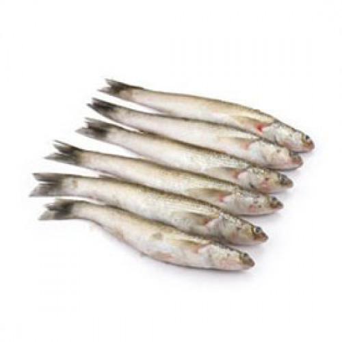Fresh Bata Fish - 500 Grm