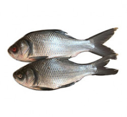 Fresh Catla Fish (Cleaned & Pieces) - 4-5 Kgs Size - Qty. 500 Grm